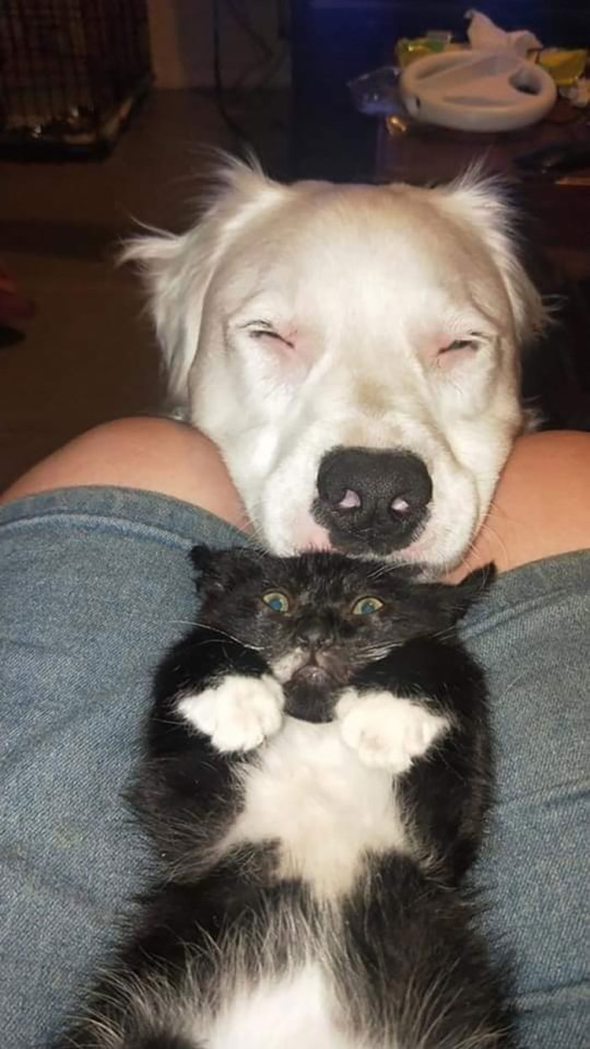 Dog licking cat