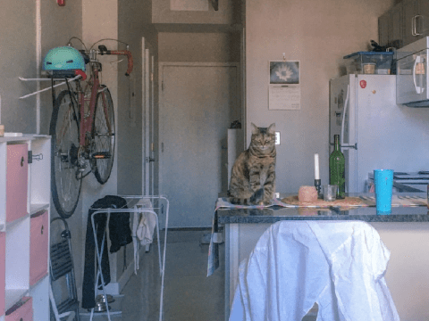 Woman shares how she's handling lockdown confined to a 289 square foot micro-apartment with her cat