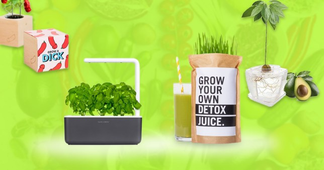 Vegetable growing kits for the home or garden that can be delivered to your door
