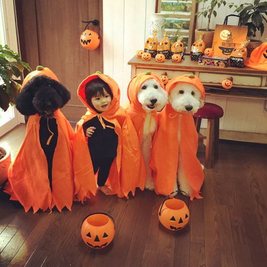 Baby and dogs wearing capes for halloween