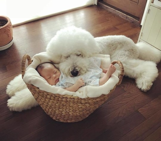 Dog and baby sleeping