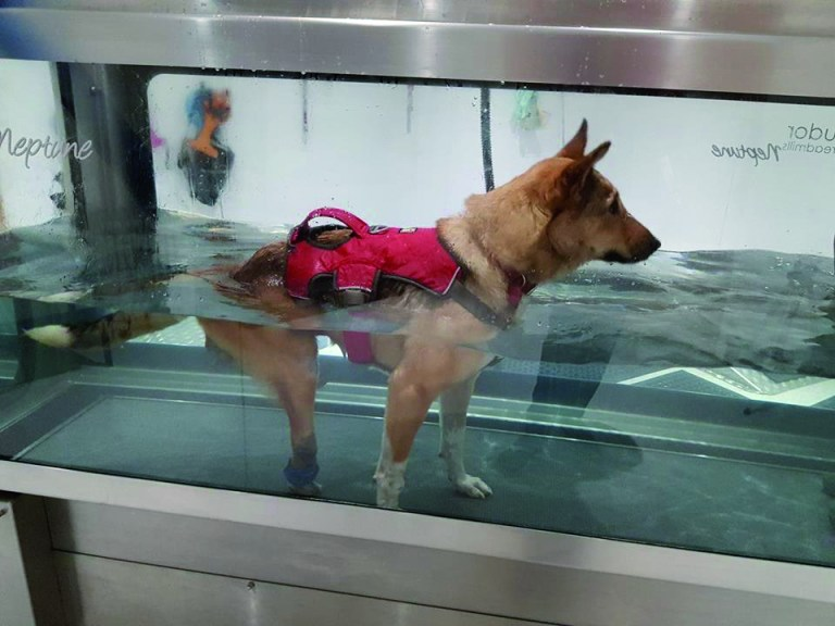 Disabled dog standing in water tank