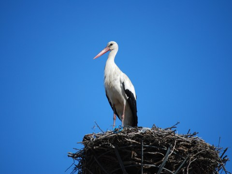 Want some good nature news? Stork chicks are hatching in the UK for the first time in 600 years