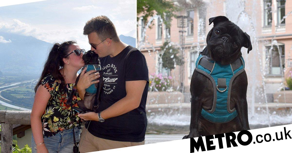 Couple stranded in Central America because they refuse to leave pug behind