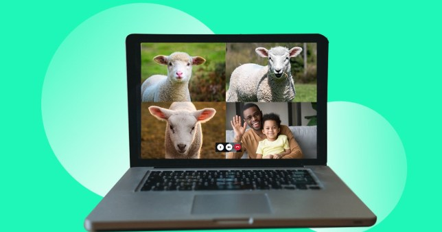 laptop showing animals and a parent and child watching