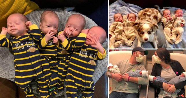 close up of quadruplet babies