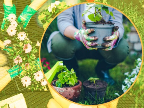 Hot tubs and gnomes are bad, bee boxes are good: The best and worst gardening trends of all time have been revealed