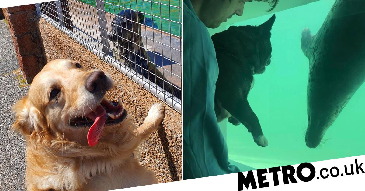 Dogs visit seal sanctuary to keep them company because they're missing humans