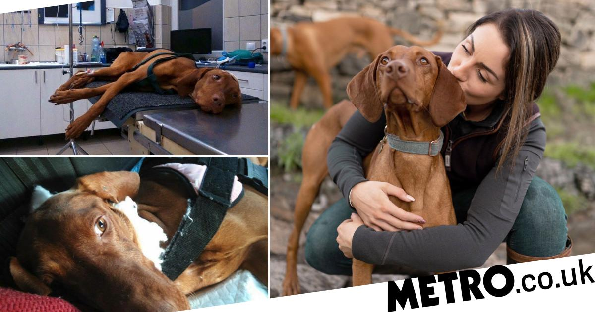 Dog found hanged with fractured skull makes 'miracle' recovery in loving home