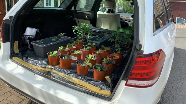 Retiree Ian Hall has decided to make use of his car while it was sitting on the driveway during lockdown - by turning it into a greenhouse