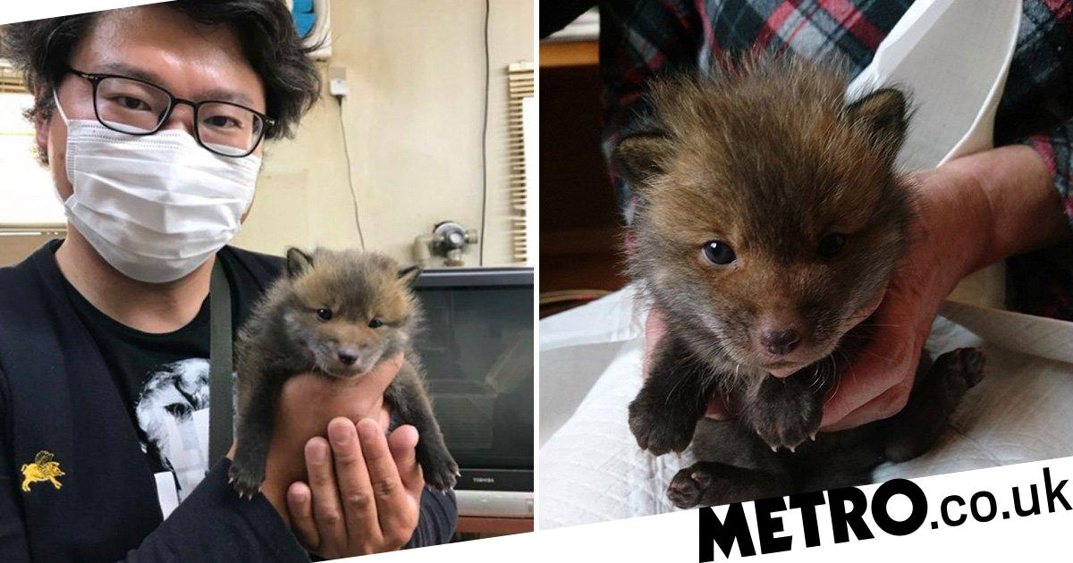 Man rescues 'puppy' from the side of a road but it's actually a baby fox
