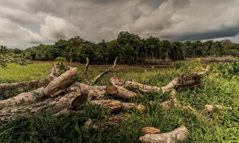 Amazon deforestation, Colombia.