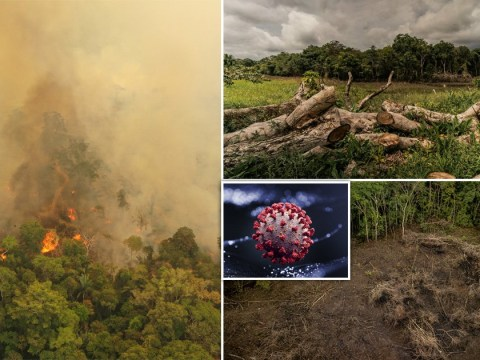 Cutting down the rainforests 'risks new pandemic'