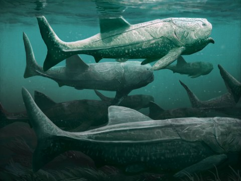 Remains of giant armoured fish dug up…in the Sahara