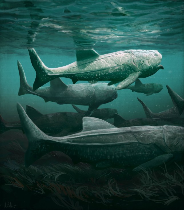 ***EMBARGOED UNTIL WEDNESDAY 00.01BST/19.01ET*** This is an artist impression of Titanichthys. See SWNS story SWNNfish; A giant armoured fish that roamed the prehistoric oceans 380 million years ago has been dug up... in the Sahara