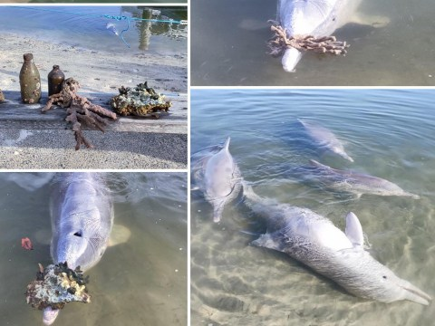 Dolphins 'desperate for humans to come back' keep bringing gifts to shore