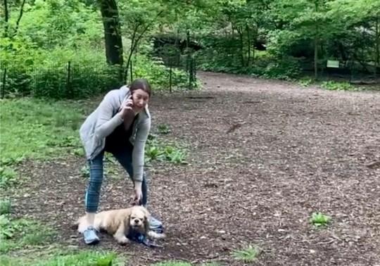 Amy Cooper avec son chien appelle la police à Central Park à New York. Une vidéo d'un différend verbal entre Amy Cooper, promenant son chien en laisse et Christian Cooper, un homme noir observant les oiseaux à Central Park, déclenche des accusations de racisme.