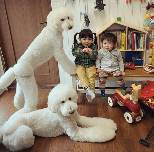 Kids and giant poodles