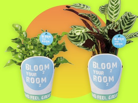 Lidl launches plant range that starts from just £1.49