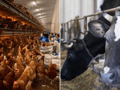 Doctors urge UK to go vegan to avoid future pandemic