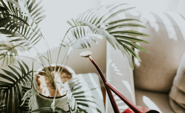 Red Watering Can next to palm plant in pot