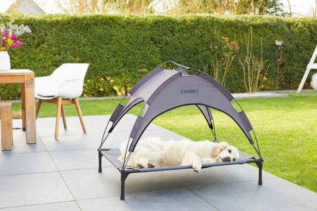 Pet sun bed