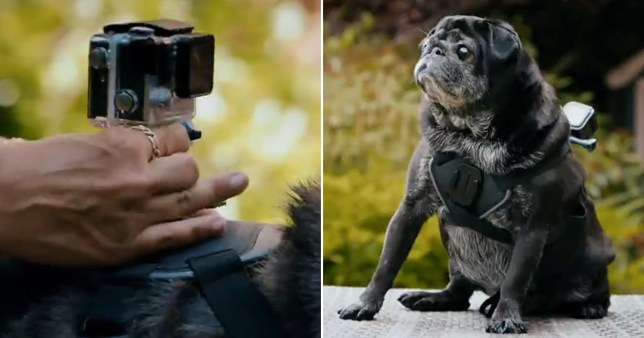 Go-Pro Camera and Pug