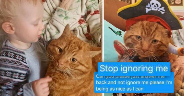 Bobby the ginger tabby cat from Widnes, Cheshire, who is in the centre of a dispute with Warrington Animal Welfare who are refusing the give the pet back