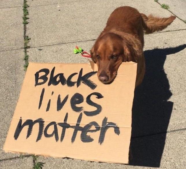 Black lives matter dog protest