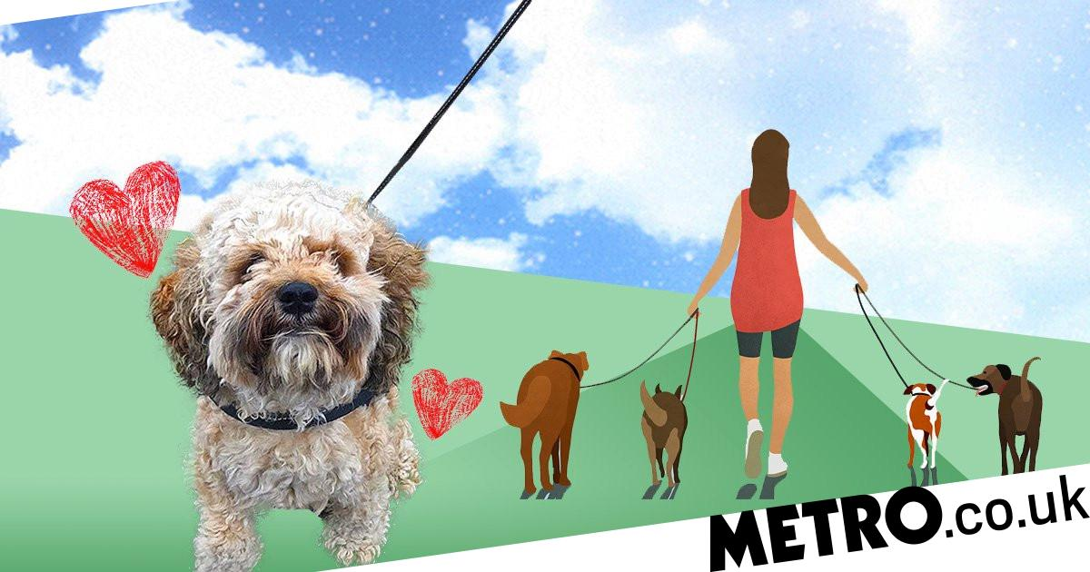 Pets are boosting our morale and productivity in lockdown, study shows