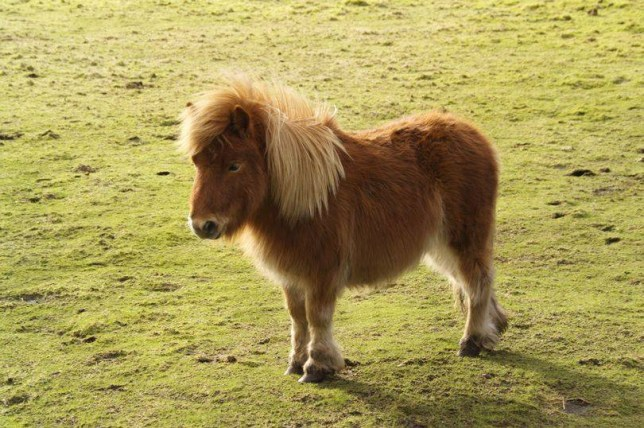 The pony named Pepper was found with stab wounds