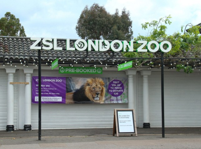 London Zoo website crashes as people buy tickets for reopening