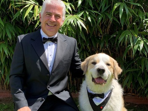 Amazing therapy dog wears tuxedo to receive award for his service