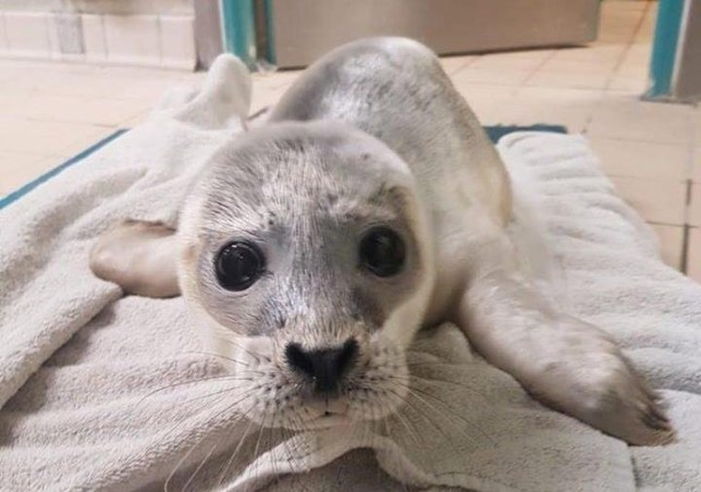Picture of Beanz the seal