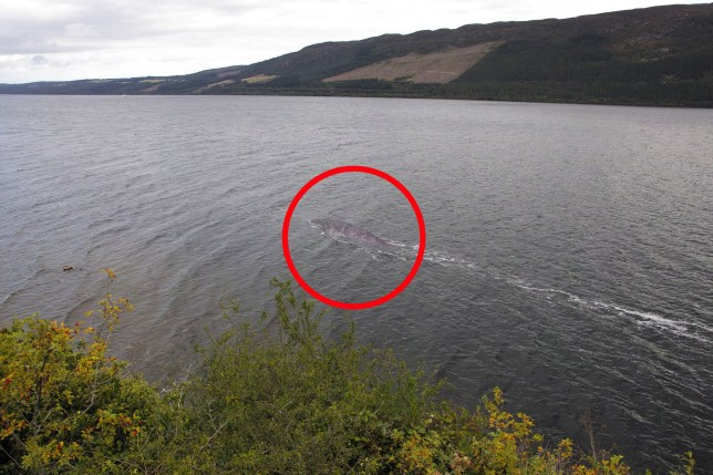 FULL WORDS AVAILABLE: INFO@COVER-IMAGES.COM . THIS CREDIT *MUST* BE USED: Steve Challice/Cover Images A man has snapped what could be the best photo evidence yet of the Loch Ness monster. Steve Challice, from Southampton, says he was at Castle Urquhart on the West bank of Loch Ness in September last year. Seeing a ???disturbance??? in the water, He managed to fire off four frames of the creature. The resulting pictures include one that shows an unidentified creature surfacing as it swims. However, Steve insists he is not claiming to have seen the mythical Nessie. He tells UK media agency Cover Images (www.cover-images.com): ???In my opinion (and I'm no expert) I think it's a large fish that got into the Loch from the sea. As to what it is personally, I think it's a cat fish or something like that but a big one. Someone suggested it may be a sturgeon. It's very large as the bit you can see must be at least 8-foot-long and who can tell what amount is below the surface. The water is very dark in Loch Ness so it's hard to tell. ???I saw a disturbance in the water in front of me and took an image, then a second one and suddenly this fish came out of the water and I got an image of it. It was gone almost instantly so much so I wasn't sure if I had got it or not. I guess it was something of a fluke shot. I waited about for a bit and took another image but didn't see the fish again.??? Where: Loch Ness, Scotland, United Kingdom When: 16 Sep 2019 Credit: Steve Challice/Cover Images **All usages and enquiries, please contact info@cover-images.com - +44 (0)20 3397 3000MANDATORY CREDIT: Steve Challice/Cover Images. Editorial Use Only.**