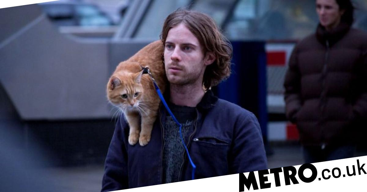 What You Need To Know About A Street Cat Named Bob 2 As Star Cat Dies Metro News