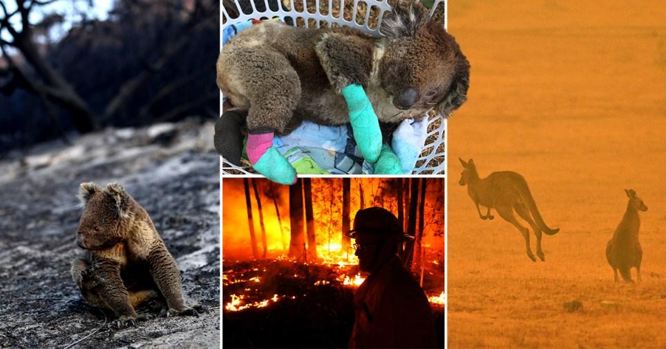 Composite image of bushfires in Australia