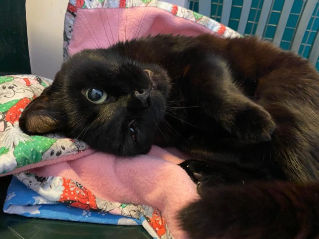 Cali, the black cat whose life was saved after he ate a needle and thread