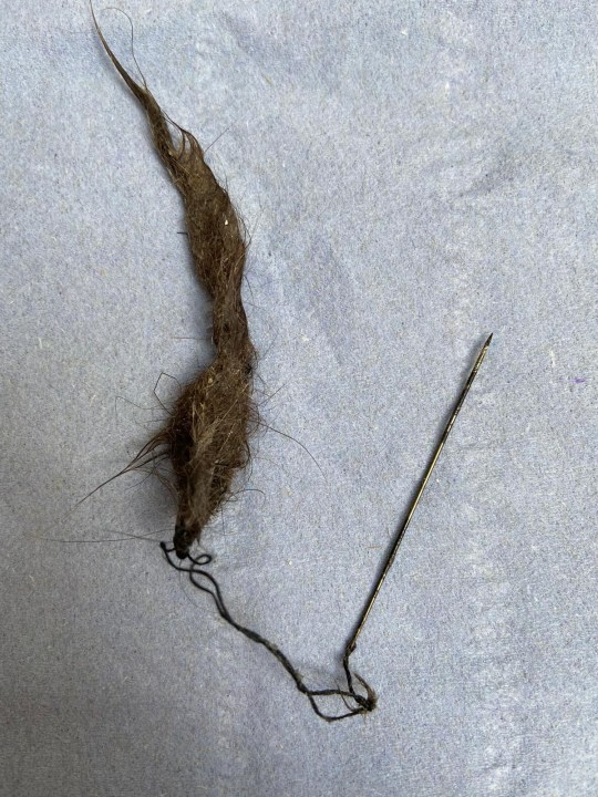 the needle and thread tangled around a wad of fur and hair found in the back of Cali's throat