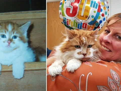 'World's oldest cat' dies at the age of 31
