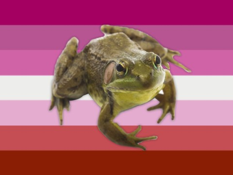 What is frog TikTok, and why does it so often cross over with lesbian TikTok?