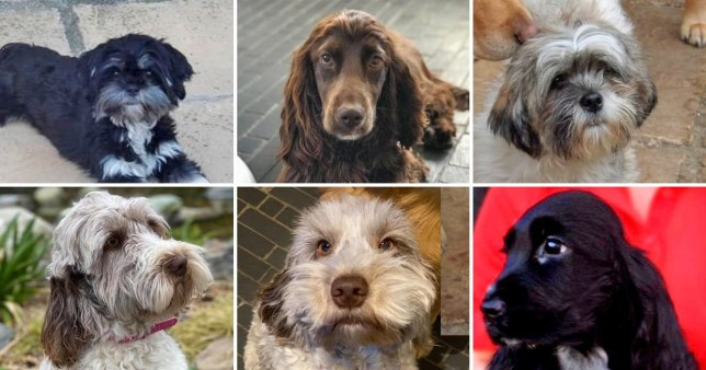 Seventeen dogs and puppies were stolen from a kennels