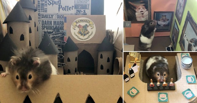 Pet owner has made dozens of miniature real-life sets including Hogwarts and Coronation Street - for her HAMSTER