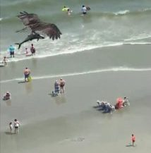 Screenshot of large bird flying with small 'shark' in its talons over Myrtle Beach, South Carolina, USA
