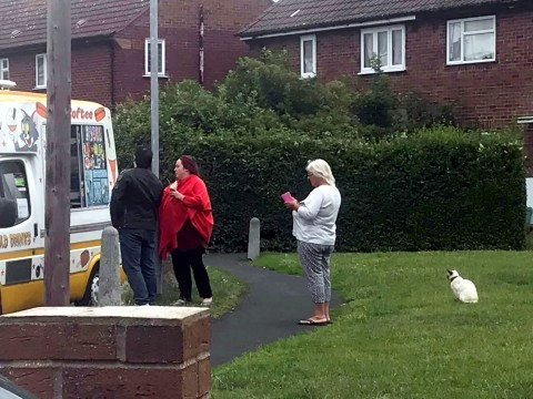 Please enjoy this cat politely waiting in line for ice cream from the van