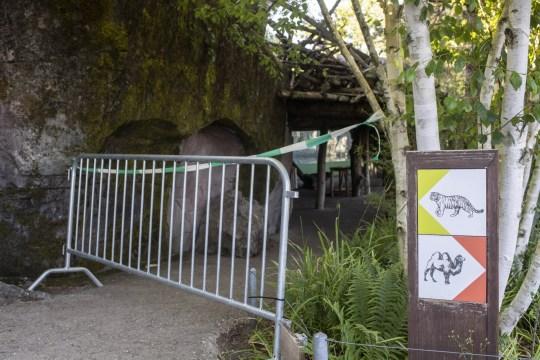epa08527041 Une zone réglementée au zoo de Zurich après l'accident dans l'enceinte du tigre où une gardienne a été attaquée et mortellement blessée par une tigre, à Zurich, Suisse, 04 juillet 2020. Deux tigres de l'Amour adultes vivent dans l'enceinte du tigre: les cinq Irina, une femme de quatre ans et Sayan, un homme de quatre ans et demi.  EPA / ENNIO LEANZA