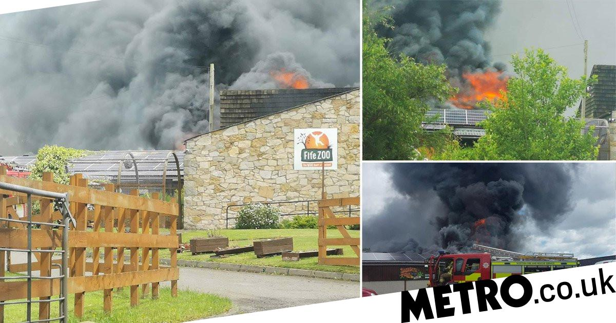 Fire breaks out at newly re-opened zoo in Scotland - metro