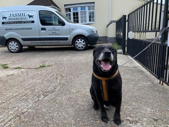 A fed up dog owner abandoned his pet after 10 years and tied him to railings (Pictured) with a note saying he could no longer cope with the mischievous pet's naughty behaviour. See SWNS story SWNNdog; The innocent-looking Labrador was discovered outside kennels with a handwritten letter saying the owner had enough and was returning the canine back to where he came from a decade earlier. The lost animal was discovered outside Jasmil Kennels and Cattery in Upchurch, near Sittingbourne, Kent, yesterday morning. He had been rejected by his owner because he had not 'learnt to be good', according to the note.