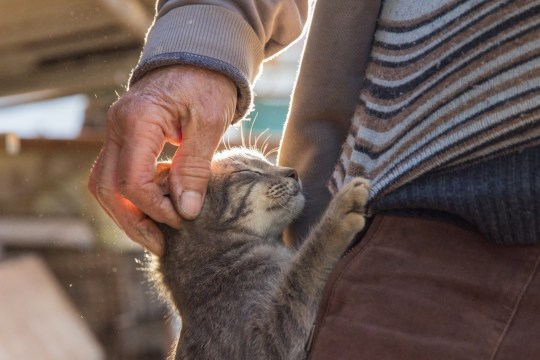 Cute cat hugging an old man in village outdoor.