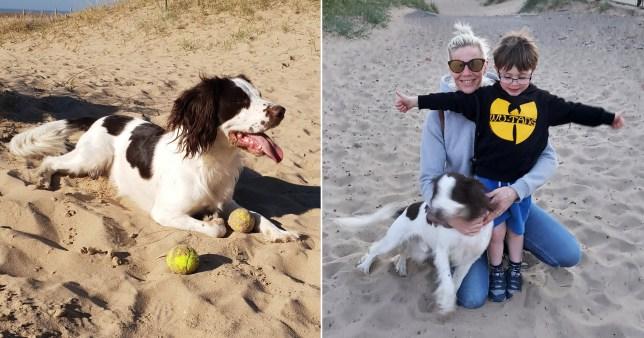 Family dog dies after eating left over barbecue food during his walk on Lytham beach